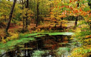 At the autumnal pond by jchanders