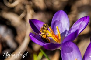 the first bee by kleinerEngl