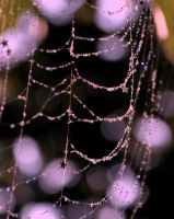 Gilded Webs by MailleQueen