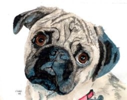 Pug by RamonaQ