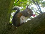 Squirrels like chocolate too by vlnfltrlh