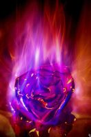 Burning Love by bexa