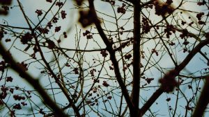 Conception with branches by Morphine-Fan