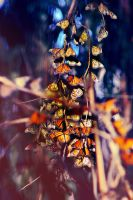 Butterfly Cluster by demons-I-weave