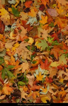 Fall Leaves Texture 01 by KYghost