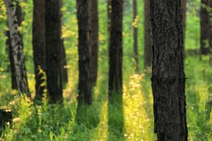 Forest by Gladhnes