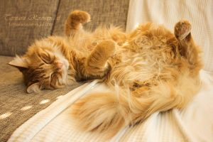 A cat's life by TammyPhotography