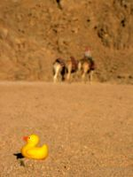 Rubber Ducky in the Desert by Ruthlessphoto