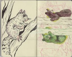 Squirrels and Bears by RayGunNoey