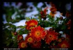 Winter War with flowers 2 by revayat