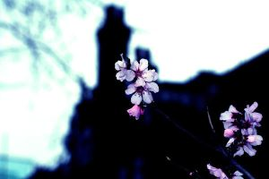 Life Within the Dark by Amy-Lou-Photography