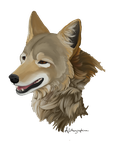 Sonoran Coyote by Alithographica