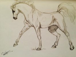 Horse sketch. by Syriemadrigal