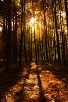 Sun in the forest by Snehurkaa10