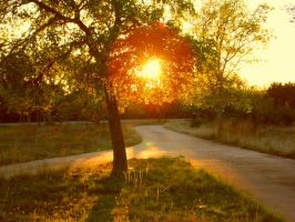 Sunset Driveway 2 by TheGerm84