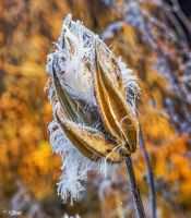 Frosty morning 8 by Nini1965