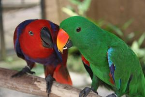 love birds by lindaatje