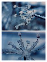 Winter Twins by Aconitum-Napellus