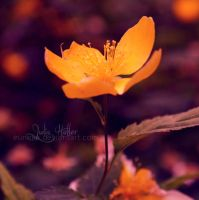 a touch of sun. by Eunelia