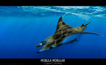 Mobula mobular by AngelMC18
