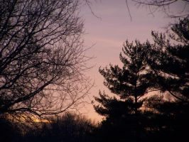 pink sky and trees by brokenphoto