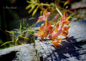 From the beautiful world of plant(XXIV). by Phototubby