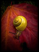nine inch snail by baspunk