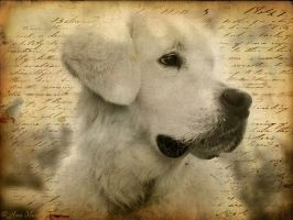 In memory of beloved dog Marley by KissOnTheRain