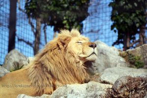Proud and majestic by arekupacific