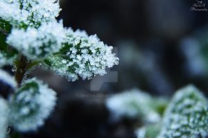 Morning frost by AkiCha