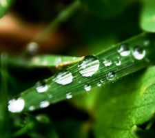droplets on a single grass, by LubelleCreativeSpark