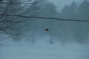 Snow Storm 2012 with a flying bird by aoifasd
