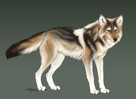 Coywolf by sevas-tra