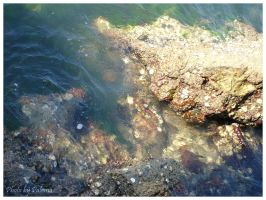 Shells and Water by palchan