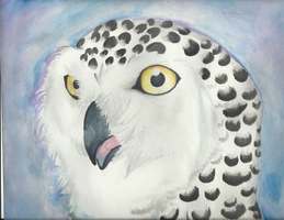 Snowy Owl (attempt..) by NeonBoneyard