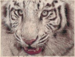 The White Tiger by Grotesque-89