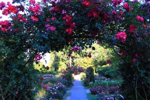 Rose Arches by Celem