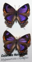 Denver Museum Butterfly 21 by Falln-Stock