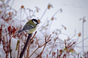 Is it still winter? by OliverBPhotography
