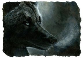 black wolf by hibbary