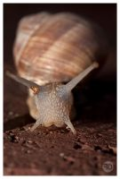 snail by sp333d1