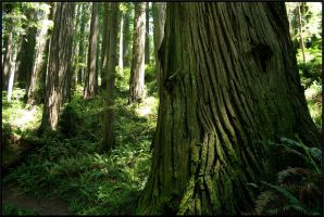 the old growth by Uzumate