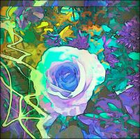 Blue rose by arkandii