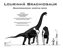 Unnamed Lourinha Brachiosaur by Paleo-King