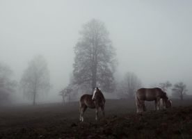 Horses in fog by MurphyL6