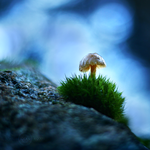 Standing under the bokeh by Healzo