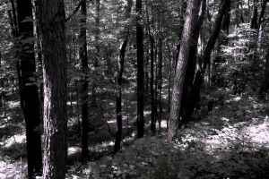 Forest Pathway 5 - edit 3 by dimensionten
