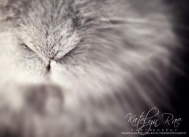 Bunny nose by katelynrphotography