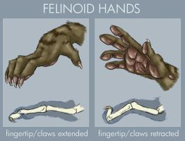 Felinoid hands by Viergacht