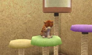 my other cat on nintendogs+cats by firestar130